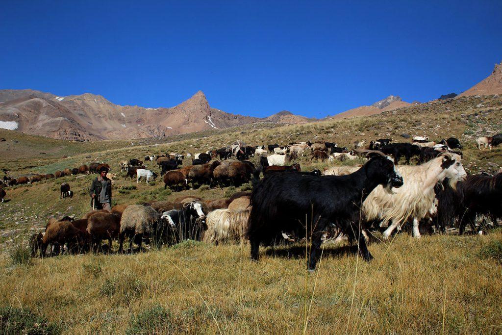 Paster i jego stado - hala Heserchal
