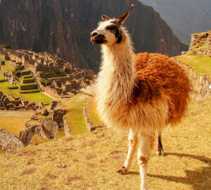 Salomon - konkurs Machu Pichhu.