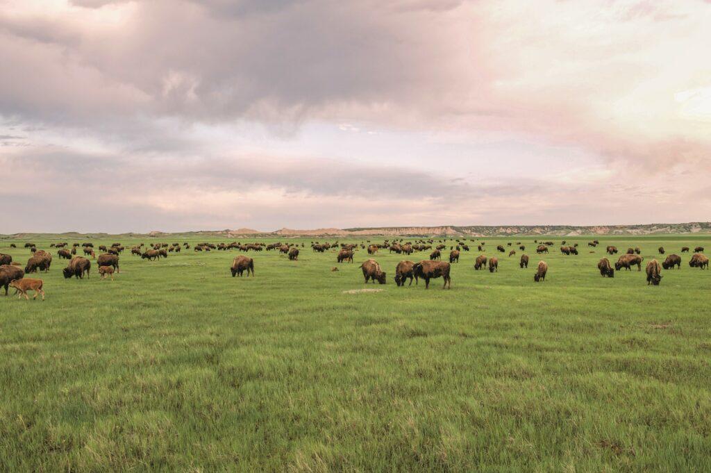 Patagonia uprawy regeneracyjnecyjne