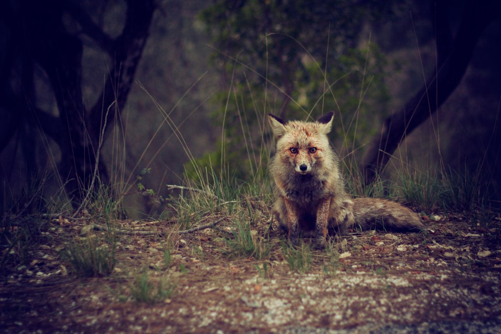 szanuj dzikie zwierzęta