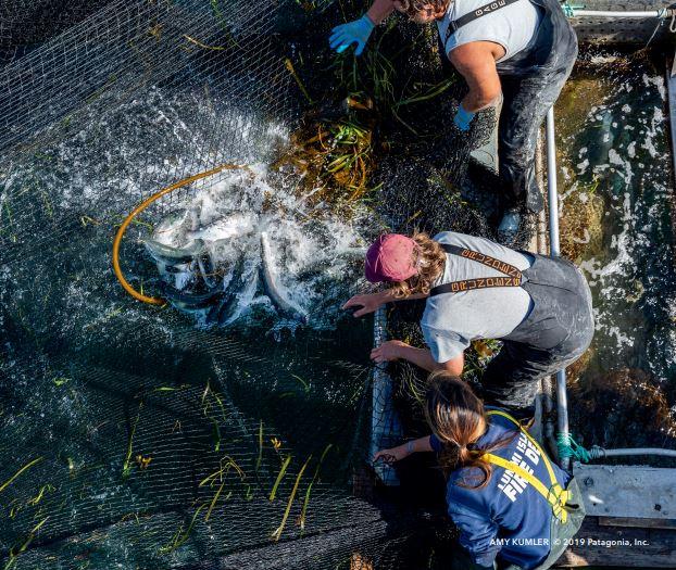 Stare sieci rybackie, a materiał NetPlus®