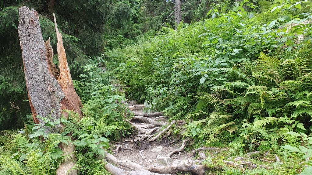 Skręt Ratowników - Babia Góra